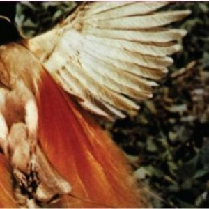 Scarlet Chives: Scarlet Chives