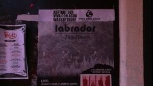 Labrador i Heidelberg 121011