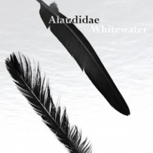 Alaudidae: Whitewater