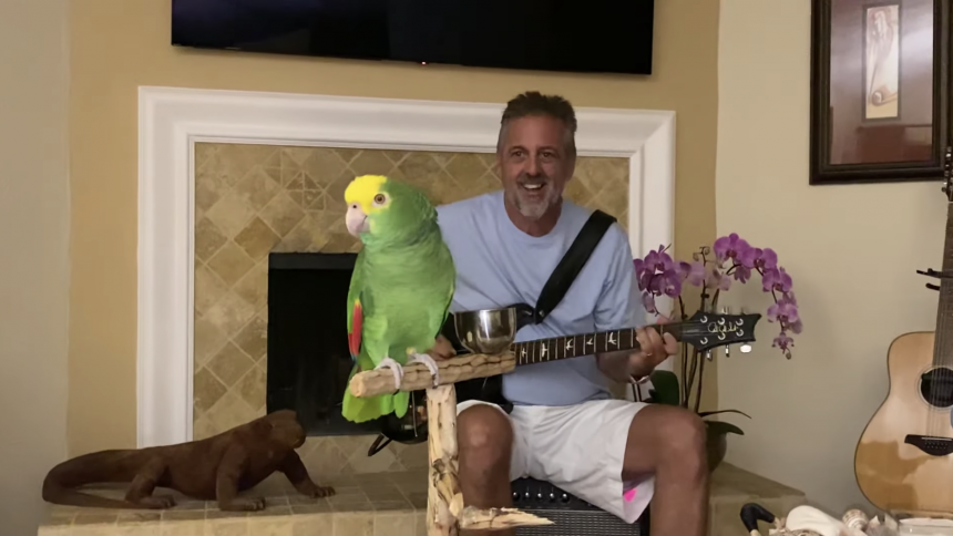 Musikalsk papegøje synger Led Zeppelin, Van Halen og Guns N' Roses